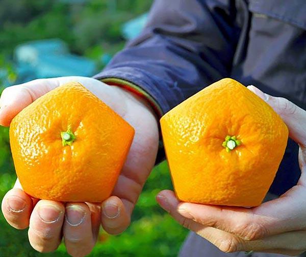 arance-sagomate-usanze-giapponesi