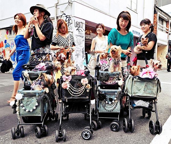 cani-passeggino-usanze-giapponesi