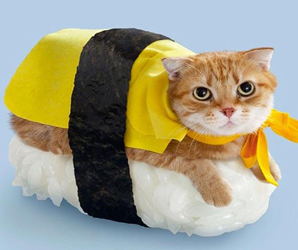 costume-sushicat-chindogu-invenzioni-giapponesi