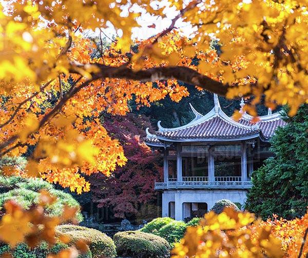giardino-shinjuku-gyoen-giappone-da-vedere