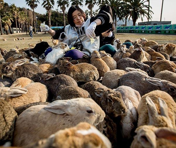 okunoshima-isola-dei-conigli-usanze-giapponesi