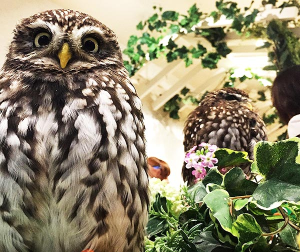 owl-cafe-tokyo-giappone-da-vedere