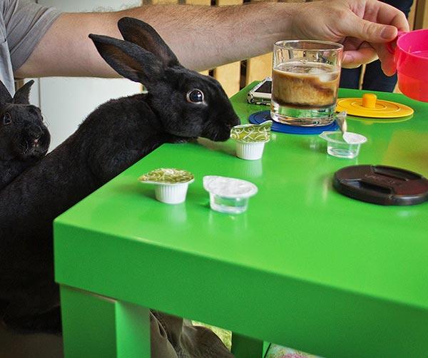 rabbit-caffè-usanze-giapponesi
