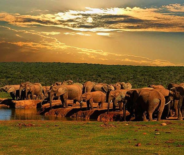 parchi-sudafricani-usi-costumi-sudafricani