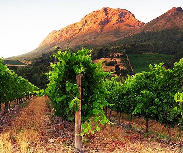 vini-sudafricani-usi-costumi-sudafricani