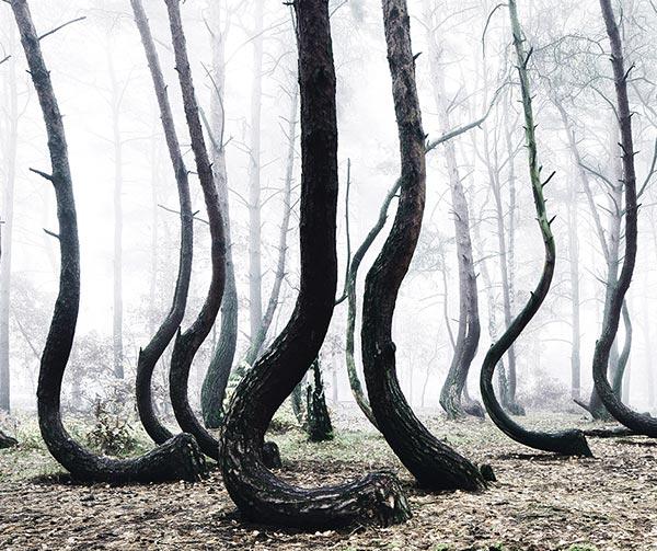foresta-bianca-usi-costumi-polacchi